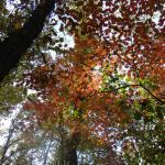 2008-10-19_13-44-40_Silvia