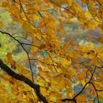 2008-10-11_13-18-00_Matteo