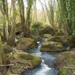 torrente nella jungla etrusca